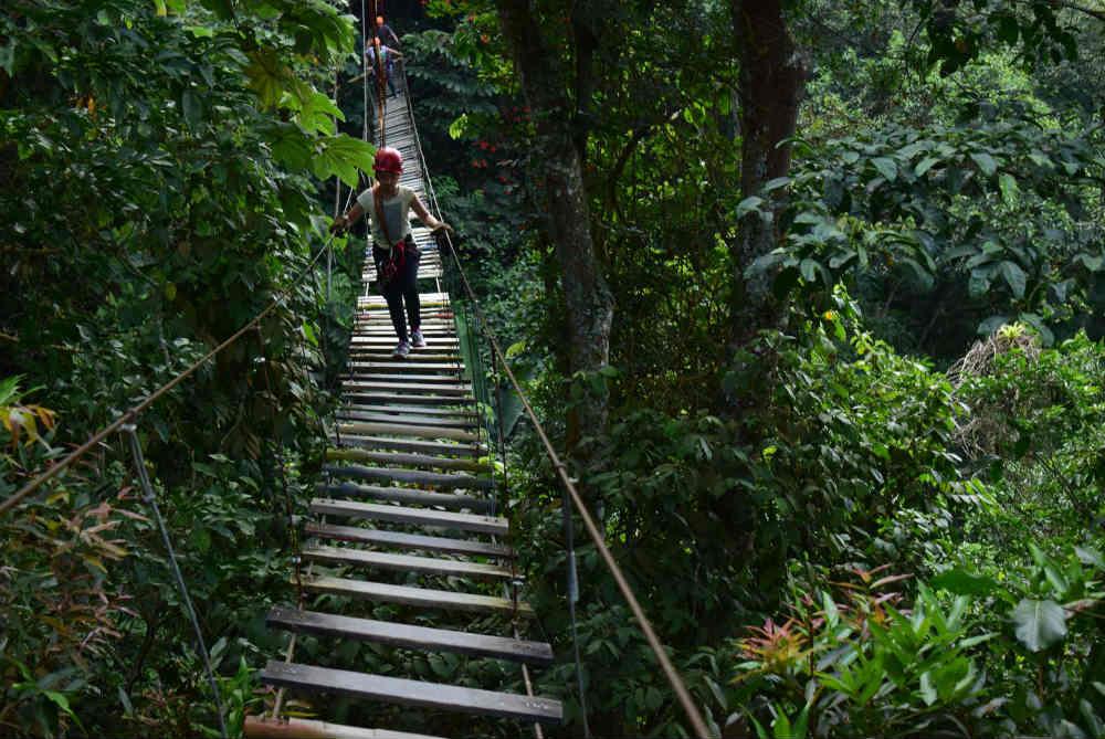 Puente Colgante Parque Macadamia Bosque Aventura i